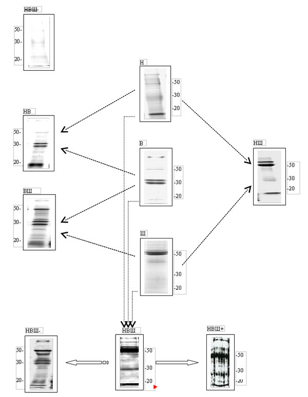 Схема предполагаемой связи